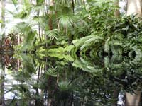 water reflection 4